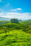 Tea plantations. In Munnar, Kerala, India royalty free stock images