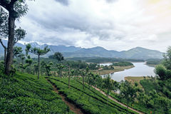 Tea plantations around Munnar, tea estate hills in Kerala Royalty Free Stock Photography