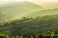 Tea Plantations at Chiang Rai Thailand. Sunrise in early royalty free stock photos