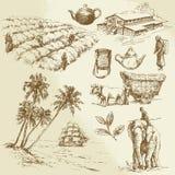 Tea plantations. Hand drawn set Royalty Free Stock Image