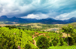 Tea plantations in India Stock Images