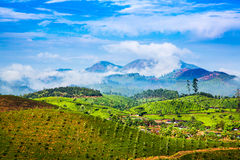 Tea plantations in India Royalty Free Stock Photo