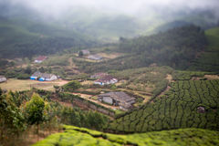 Houses in the middle of a tea plantation Stock Image