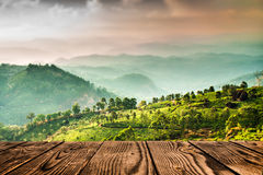 Tea plantations in India (tilt shift lens) Stock Images