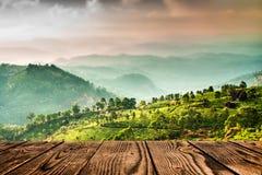 Tea plantations in India (tilt shift lens) Stock Images