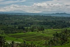 Tea plantations in Indonesia Royalty Free Stock Image