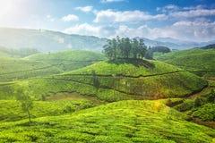Tea plantations in Kerala, India Stock Photos