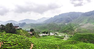 Tea plantations in Malaysia royalty free stock photography