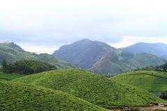 Tea plantations Munnar. Colorful tea plantations of Munnar, India Stock Photos