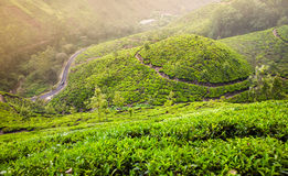 Tea plantations in Munnar Royalty Free Stock Photography