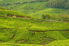 Tea plantations munnar india Royalty Free Stock Image
