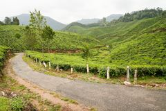 Tea plantations munnar india Stock Images