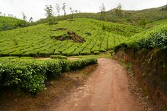 Tea plantations munnar india Stock Photos