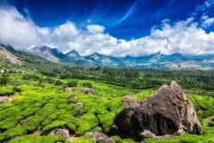 Tea plantations. Munnar, Kerala Stock Photography
