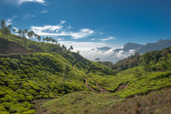 Tea plantations in Munnar, Kerala, India Stock Images