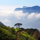 Tea plantations in Munnar, Kerala, India Royalty Free Stock Photos