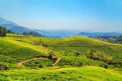 Tea plantations in Munnar, Kerala, India. Stunning views of green hills with blue sky stock photography