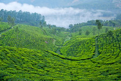 Tea plantations in Munnar, Kerala, South India Royalty Free Stock Photo
