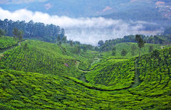 Tea plantations in Munnar, Kerala, South India Royalty Free Stock Image