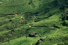 Tea Plantations of Munnar Royalty Free Stock Photo