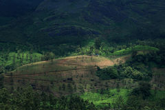 Tea Plantations of Munnar Stock Photography
