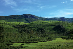 Tea Plantations of Munnar Royalty Free Stock Photos