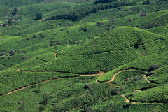 Tea Plantations of Munnar Royalty Free Stock Photo