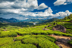 Tea plantations and river in hills,  Kerala, India Stock Photo