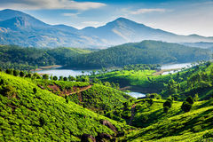 Tea plantations and river in hills. Kerala, India. Tea plantations and Muthirappuzhayar River in hills near Munnar, Kerala, India stock photo