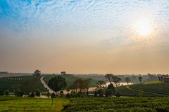Tea plantations. Scenery of tea plantations in northern Thailand at sunrise royalty free stock photo