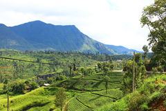 Tea plantations in Sri Lanka Stock Image