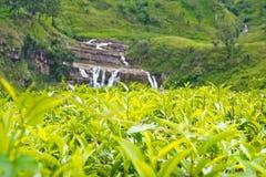 Tea Plantations In Sri Lanka Stock Photos