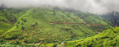 Tea plantations. Sri Lanka. Panorama Stock Photo