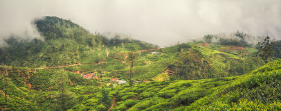Tea plantations. Sri Lanka. Panorama Stock Images