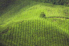 Tea plantations in state Kerala, India Stock Images