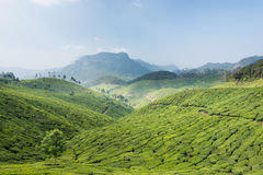 Tea plantations. In a valley nearMunnar, Kerala. Mountains in background Stock Photos