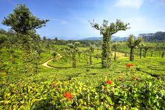 Tea plantations in Valparai, India Stock Photo
