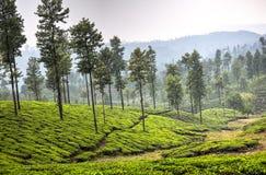 Tea plantations in Valparai, India stock images