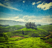 Tea plantations Royalty Free Stock Photos