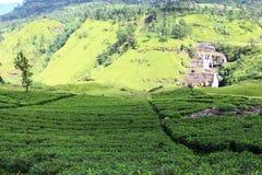 Tea plantations and waterfalls Saint Clair Stock Photography