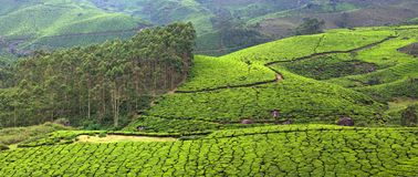 Tea plantations in Western Ghats mountain, Kerala, South India. Panorama of Tea plantations in Western Ghats range of mountain, Munnar, Kerala, South India stock photos