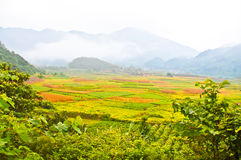Tea plants of south china Stock Photos