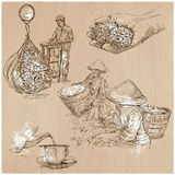 Tea Processing. Agriculture. An hand drawn vector illustration. Stock Photos