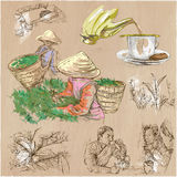Tea Processing. Agriculture. An hand drawn vector illustration. Stock Images