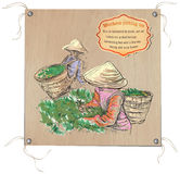 Tea Processing. Agriculture. An hand drawn vector illustration. Royalty Free Stock Photos