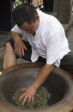 Tea processing Stock Image