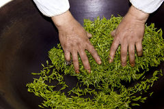 Tea processing's hand Stock Photo