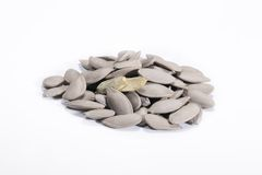 Tea pumpkin seed Royalty Free Stock Image