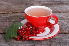 Tea with red viburnum berries Royalty Free Stock Image