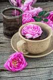Tea rose Stock Images